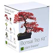 Kit for growing 3 bonsai